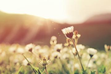 article Trouve ta voie avec l'Ikigai